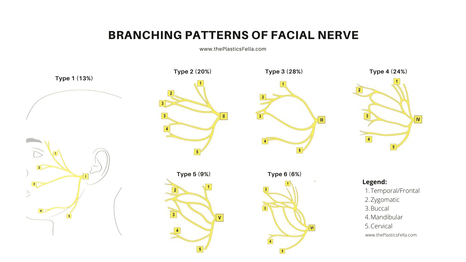 Branching patterns of the facial nerve