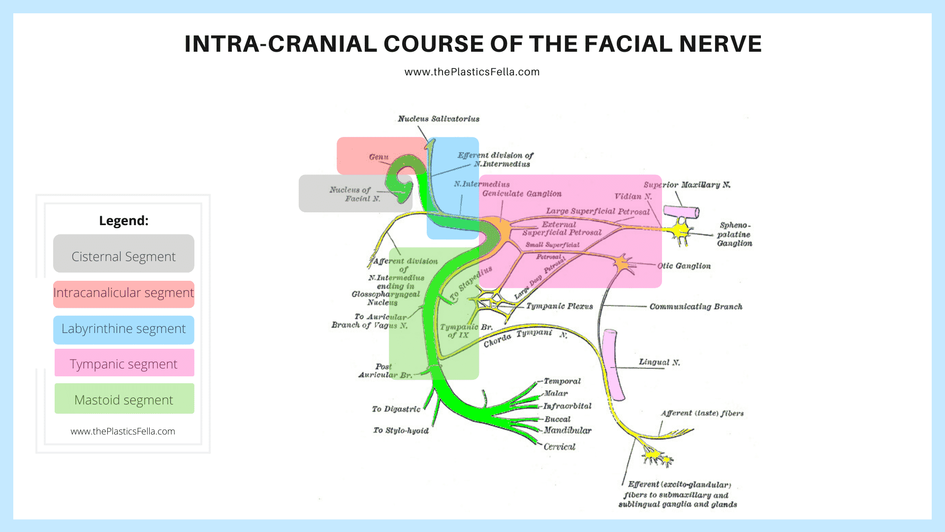 Intracranial Course of the Facial Nerve, its segments and branches.