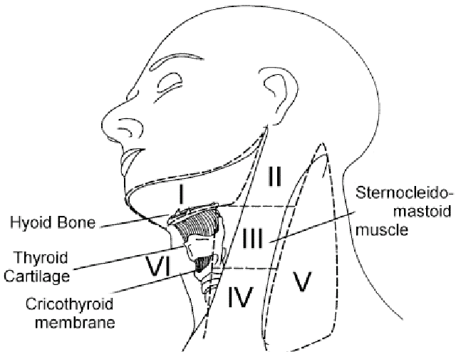 Level 5 Cervical Nodes and nearby structures