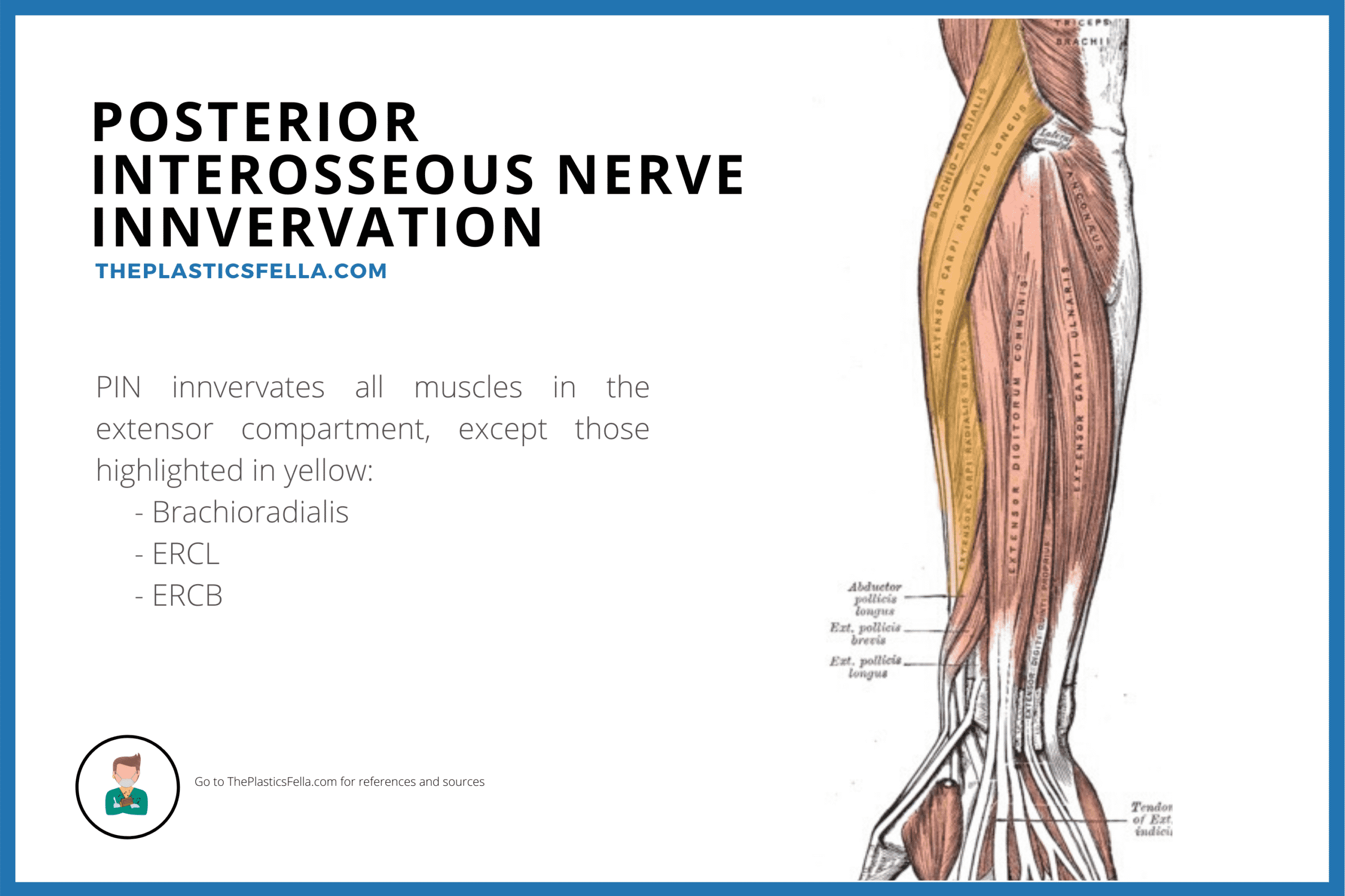 Muscles Innervated by the Posterior Interosseous Nerve (Palsy, Syndrome)