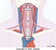 Level VII Cervical Lymph Nodes