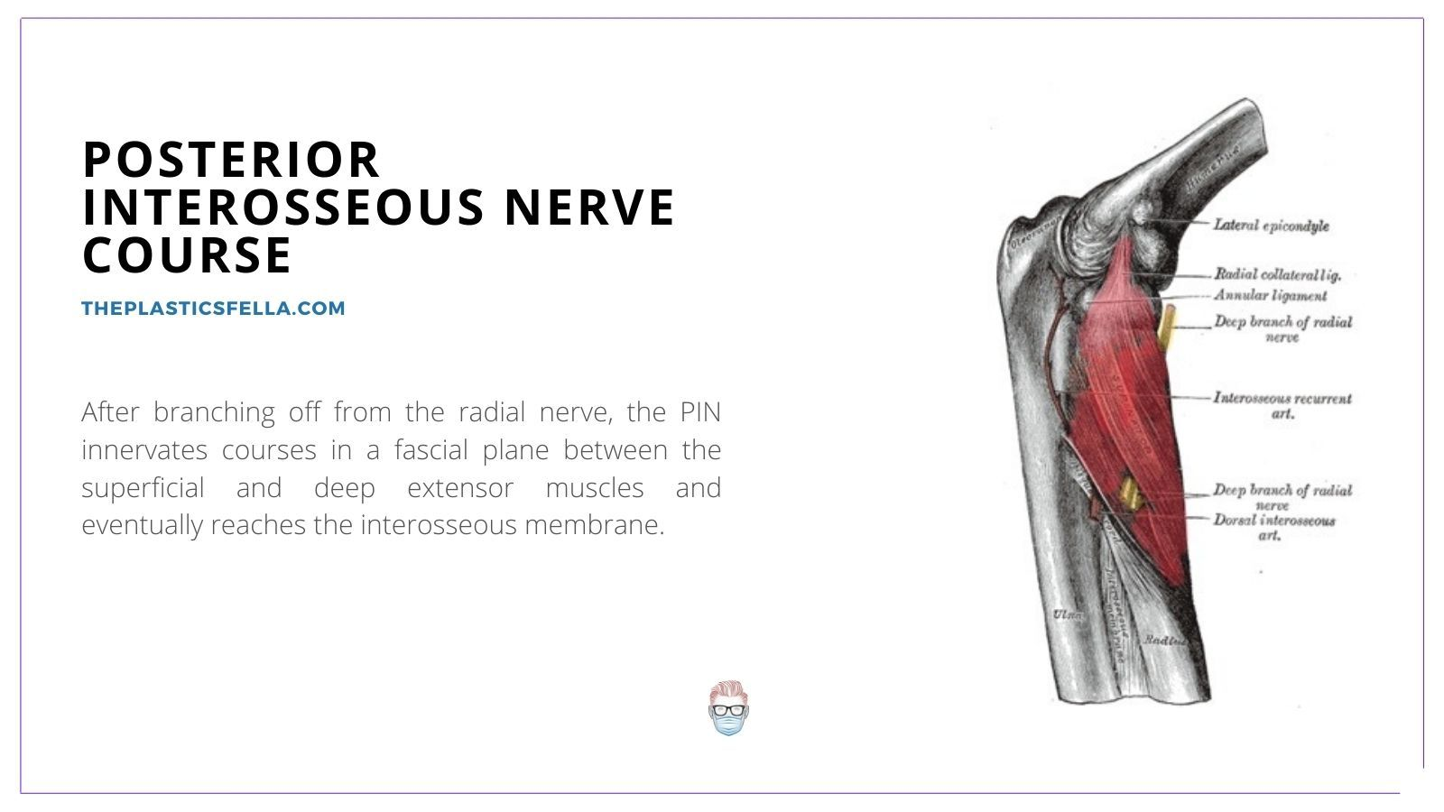 Posterior Interosseous Nerve (PIN) Branches, Posterior Interosseous Nerve (PIN) Course, Posterior Interosseous Nerve (PIN) Pathway, Posterior Interosseous Nerve (PIN) Compression