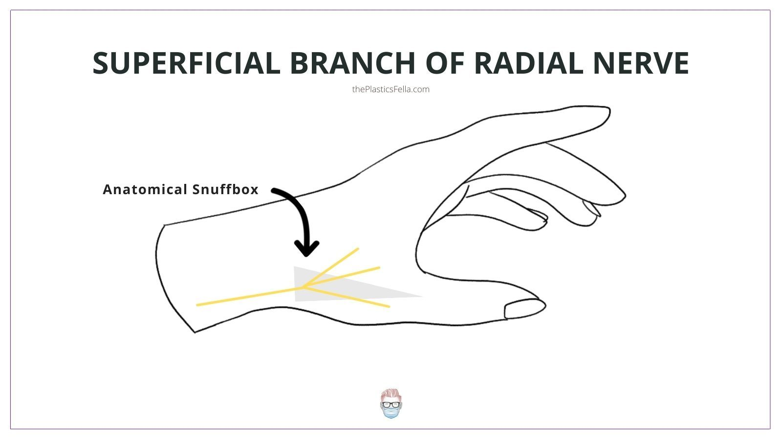 Anatomy and Location of the Superficial Branch of the Radial Nerve (SBRN)
