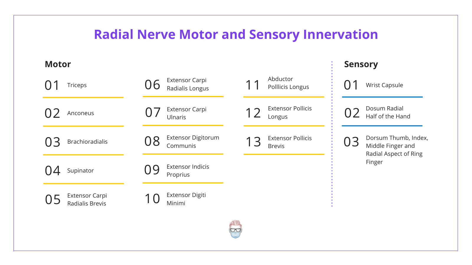 Radial Nerve Motor and Sensory Innervation to Skin and Muscles, Triceps, Extensors, Hand