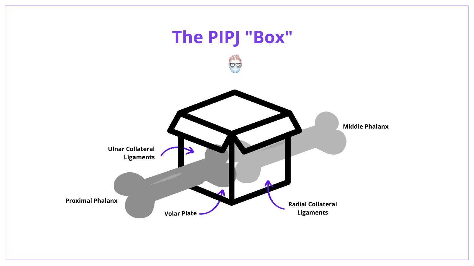 Anatomy, Proximal Interphalangeal Joint, PIPJ, Dislocation